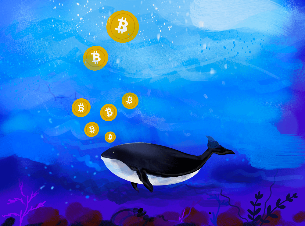 Bitcoin whales bought the dip at $30,000 as retail investors sold